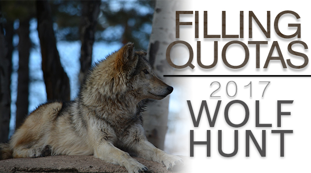Wolf Season Story – Eastman